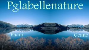 Pglabellenature